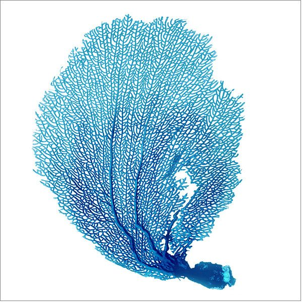 Blue Seafan Coral VI Canvas Wall Art ($172) ❤ liked on Polyvore featuring home, home decor, wall art, canvas home decor, blue home accessories, coral home decor, sea fan and coral home accessories