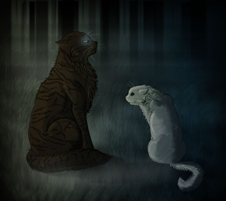 Hawkfrost Fell In Love With Ivypool In The Dark Forest, He