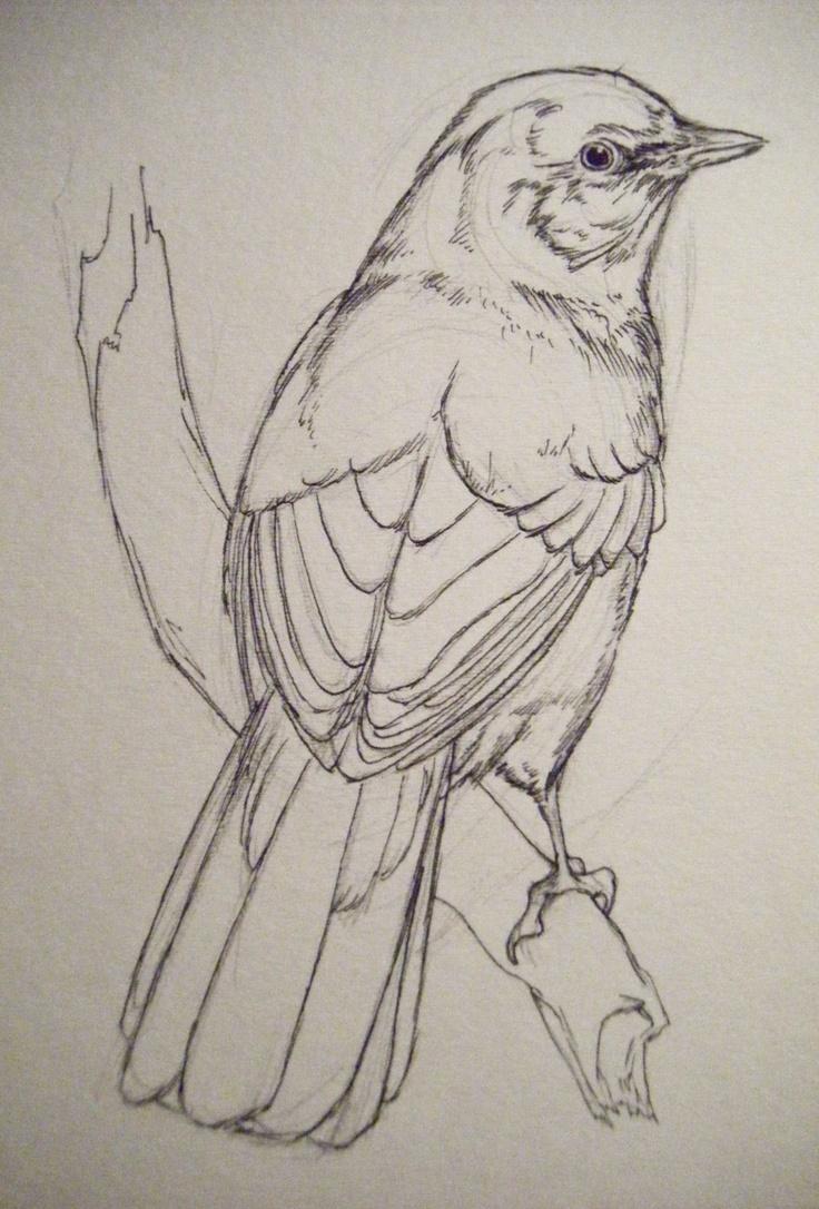 Картинки нарисованные карандашом птички