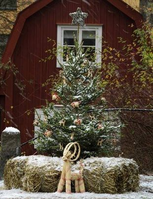 outdoor tree. hay...with manger