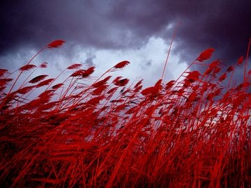 red red red: Red Sea, Life, Medford Taylors, Colors Photography, National Geographic, Red Red, Sea Oats, Storms Cloud, Fields