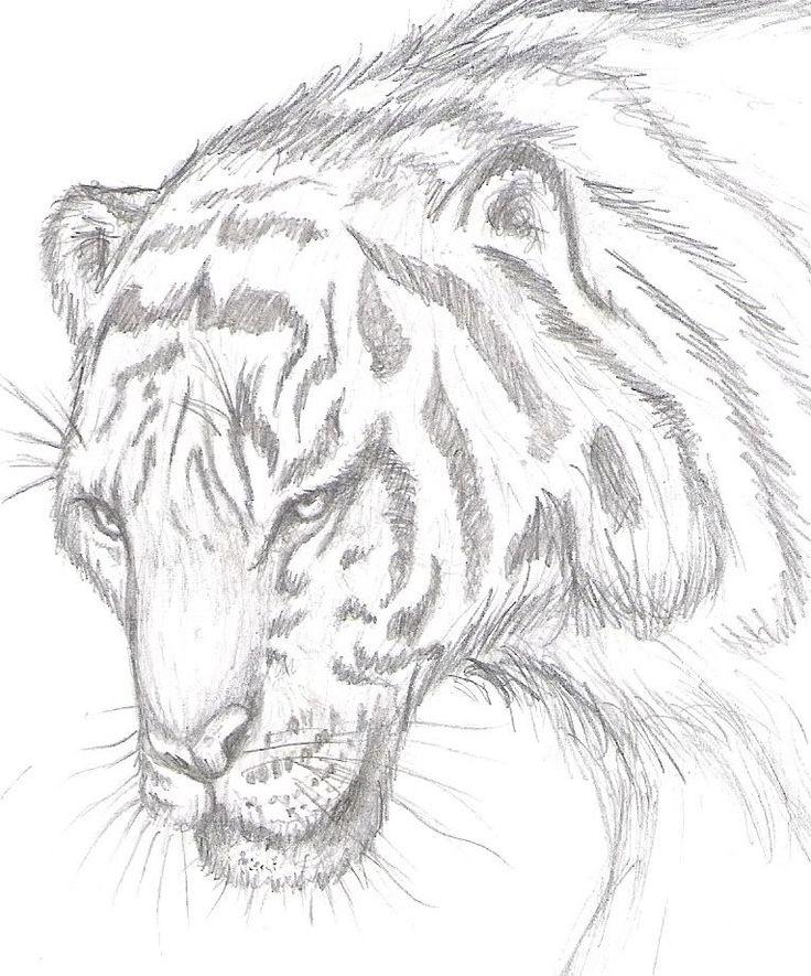 Mis Retratos A Lapiz De Actores  y otros dibujos de animales