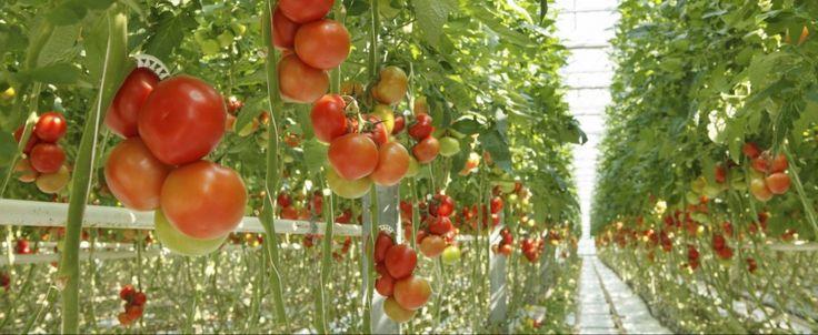 """Överproduktion, växtförädling och bekämpningsmedel.  I början av året sände Sveriges Radio en alltför dåligt uppmärksammad reportageserie """"Matens Pris"""" om hur vi genom överproduktion, bekämpningsmedel och växtförädling, utarmar våra grödor och förstör naturen och vår hälsa. Den är värd att lyssna på/läsa om igen!  #hållbarframtid #näringförlivskraft #matenspris"""