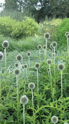 Sussex Prairies Garden, Sussex.