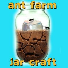 Small jar in a bigger jar sandy soil and less than 20 ants. Feed them sugar water and bird or grass seed once a week. Remember tiny holes in the top of the jar!