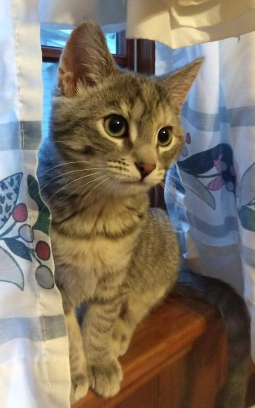 Adopt Estrella On With Images Cat Adoption Help Homeless Pets Pet Adoption