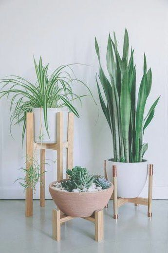 DIY Plant Stand ideas to Fill Your Home With Greenery DIY Plant Stand ideas - Got a corner of your house in need of a pick-me-up? Wouldn't a plant be just perfect for that space? But you need something dramati Wooden Plant Stands, Diy Plant Stand, Plantas Indoor, Diy Zimmer, Iron Plant, Wooden Flowers, Flower Stands, Diy Apartment Decor, Large Plants