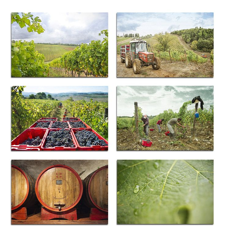 Wine print set, photography set, Tuscany wall art, Italy photo set, Chianti Montalcino travel, set of 6 di Molo7Photography su Etsy
