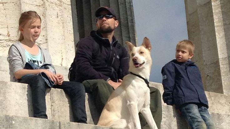 Spike  Alaskan Husky Mischling | Pawshake