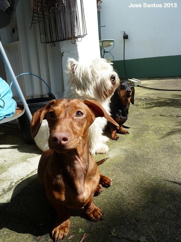 Flora, Jonas and Cleo loving the sun in Milfontes' house.