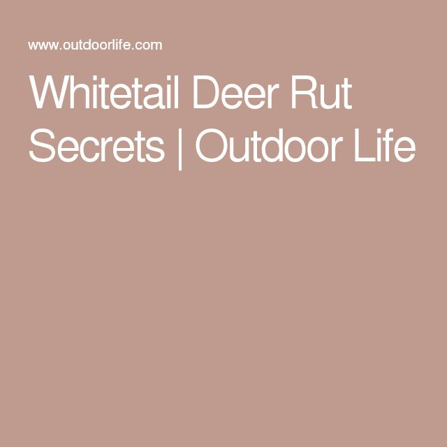 Whitetail Deer Rut Secrets | Outdoor Life