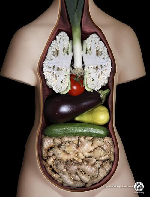 Vegetables organs... I may be one of five people I know that thinks this is pretty freaking neato!