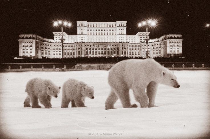 Last Night In Bucharest