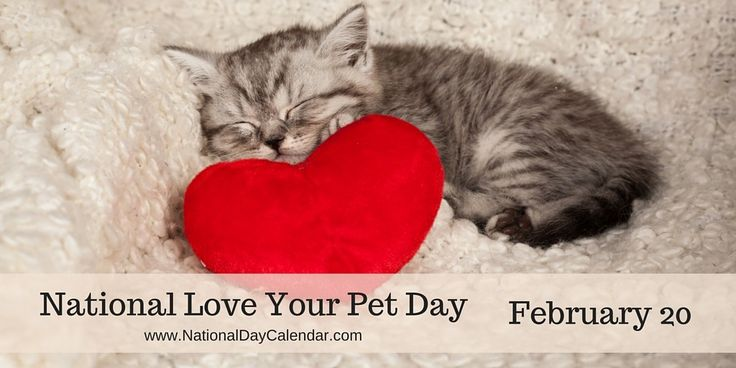 NATIONAL LOVE YOUR PET DAY � February 20 - On February 20th, pet lovers everywhere observe National Love Your Pet Day.  This unofficial national holiday is a day set aside to give extra attention to and pamper your pets.  This is a good day to focus on the special relationship that you have with your pets.