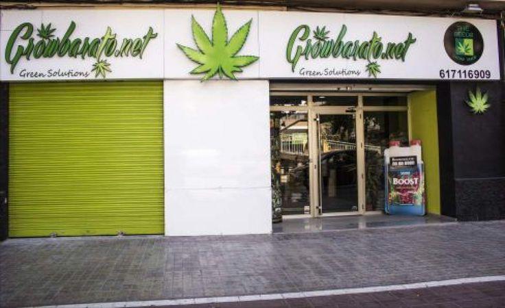 Si te gusta el cannabis, este es tu oportunidad para trabajar y vivir de él - http://growlandia.com/marihuana/si-te-gusta-el-cannabis-este-es-tu-oportunidad-para-trabajar-y-vivir-de-el/