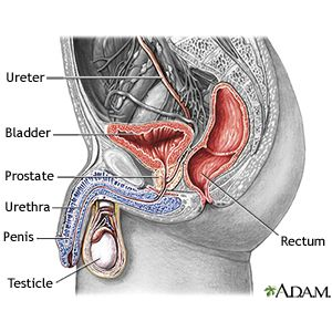 Urinary Tract Infection In Men - Symptoms & Treatment Options