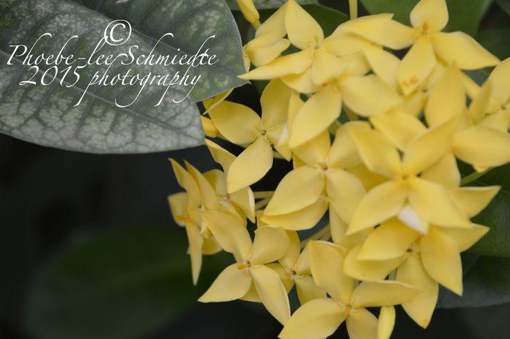 very little yellow flowers in bali, 2014