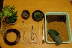 How To Make Bonsai ~ Also growing and watering tips.