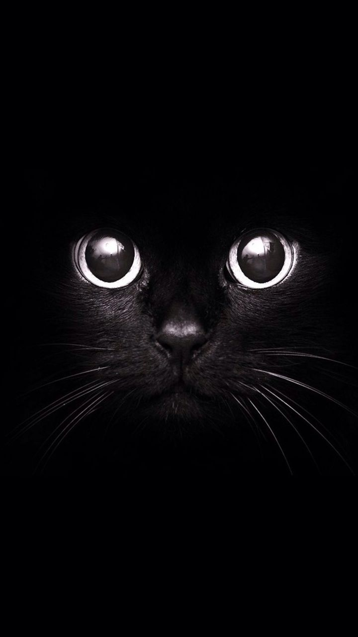 Black Cat - Irresistable cuteness #cats #animal iPhone wallpaper | mobile9.com