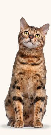 Famvir medication for cats
