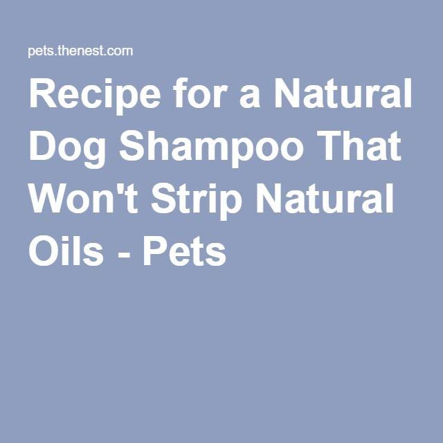 Recipe for a Natural Dog Shampoo That Won't Strip Natural Oils - Pets