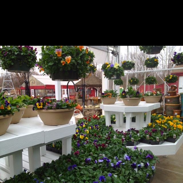 Blooms Garden Centre: 1000+ Images About Displays On Pinterest