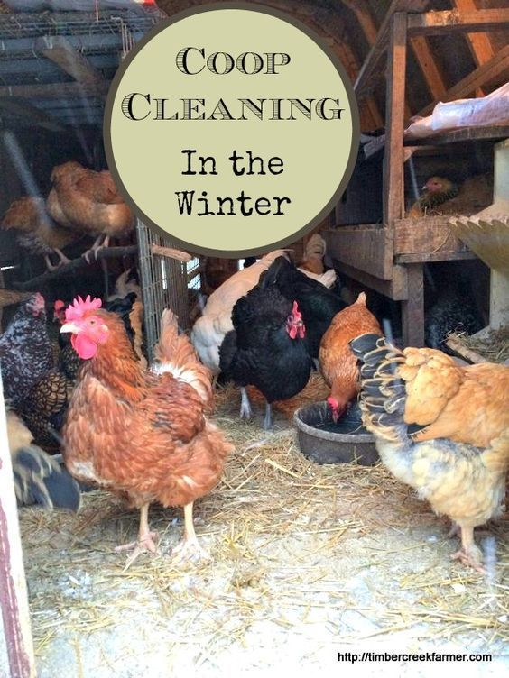 Coop cleaning in the winter can be done even if you are using the deep litter method of coop maintenance. When litter piles up too deep try this approach