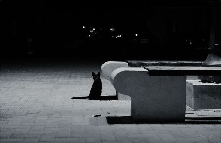Ночь в порту. Кипр. Пафос. Порт #кипр #пафос #кот #в #порту #ночь #тень #черная #фонарь Автор: Darn Cat