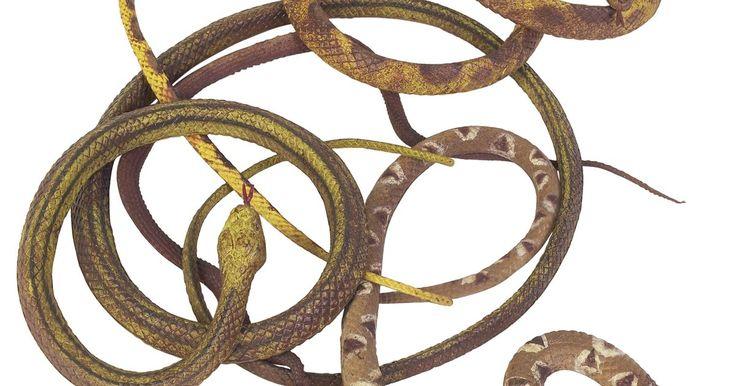 """¿Qué es un nido de serpientes?. Un nido de serpientes es un término que ha variado de significados. Literalmente, un nido de serpientes es un pozo donde las serpientes se congregan ya sea de forma natural o colocadas allí por los seres humanos. El pozo de serpientes en la película """"Indiana Jones"""" es una imagen familiar que viene a la mente. Nido de serpientes también se refiere ..."""