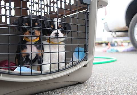 September is National #Disaster Preparedness Month, and as our friends at Pet Food Warehouse have always advised: Be Prepared, Not #Scared.