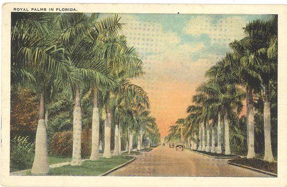 Vintage Florida Postcard - Royal Palms in Florida Old Cars