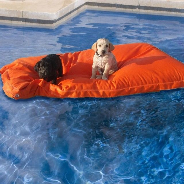 How cute is this Pet Kai pool float?