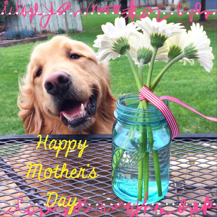 187 Best Happy Mothers Day+%+ Images On Pinterest