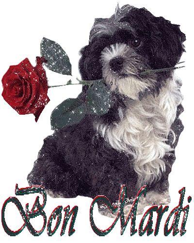 """""""Bon mardi"""" - Chien portant une rose rouge dans la gueule"""