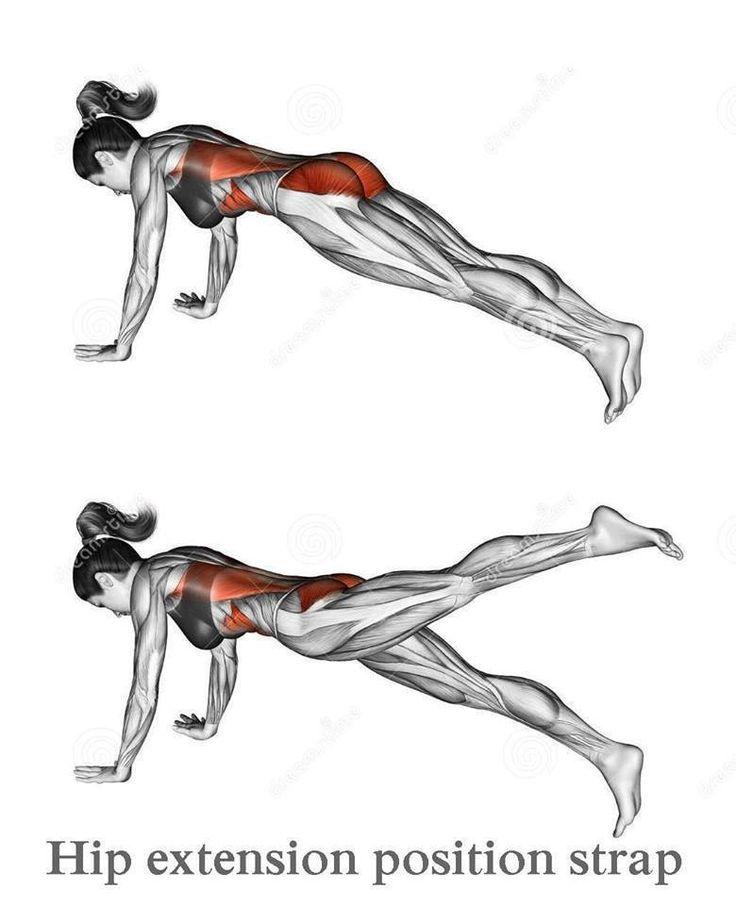 27 best Yoga Anatomía/Fisiología images on Pinterest | Anatomía de ...