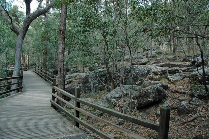 Toohey Forest Reserve. One of our favourite places to walk/run on the weekends.
