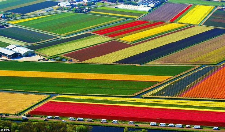 Tulips are everywhere in the Netherlands
