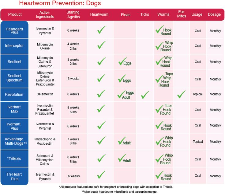 Best Heartworm Prevention Medicine For Dogs