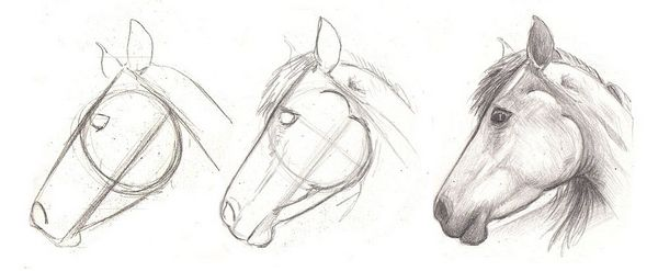 how to draw a horse head/ como dibujar la cabeza de un caballo