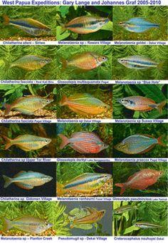 RainbowFish info