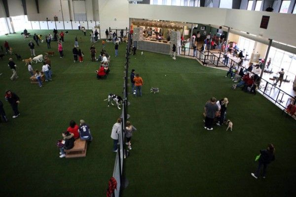 Costly To Start But Cool Indoor Dog Park Indoor Dog