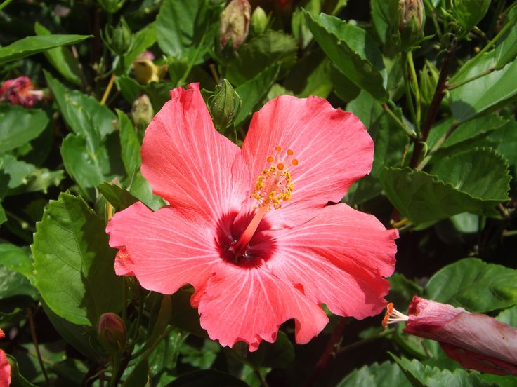 Tropical Island Flowers: 17 Best Images About Kauai