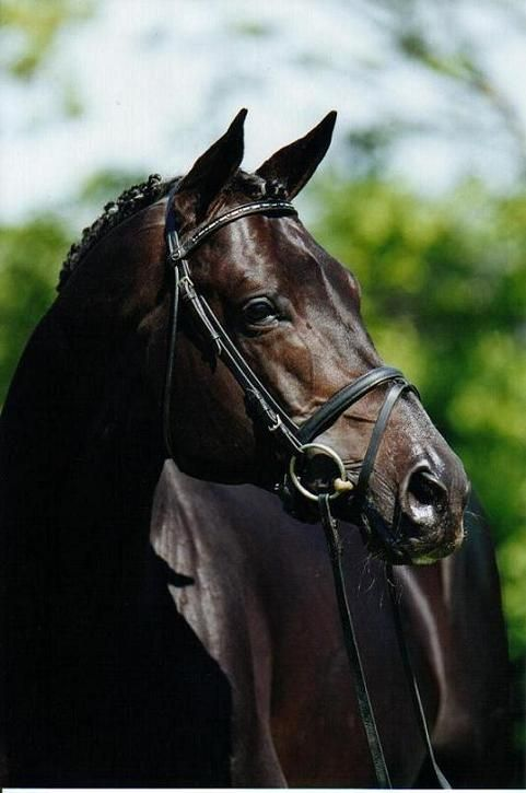 Would love love love to have a horse like him! Beautiful....