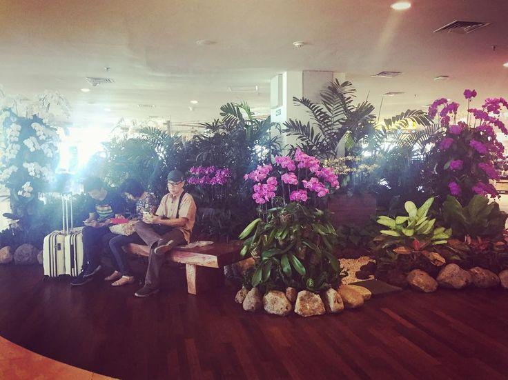 Bali airport / transfert to Djakarta #orchids #airport #flowerpower #travelphotography #traveller #li #fb