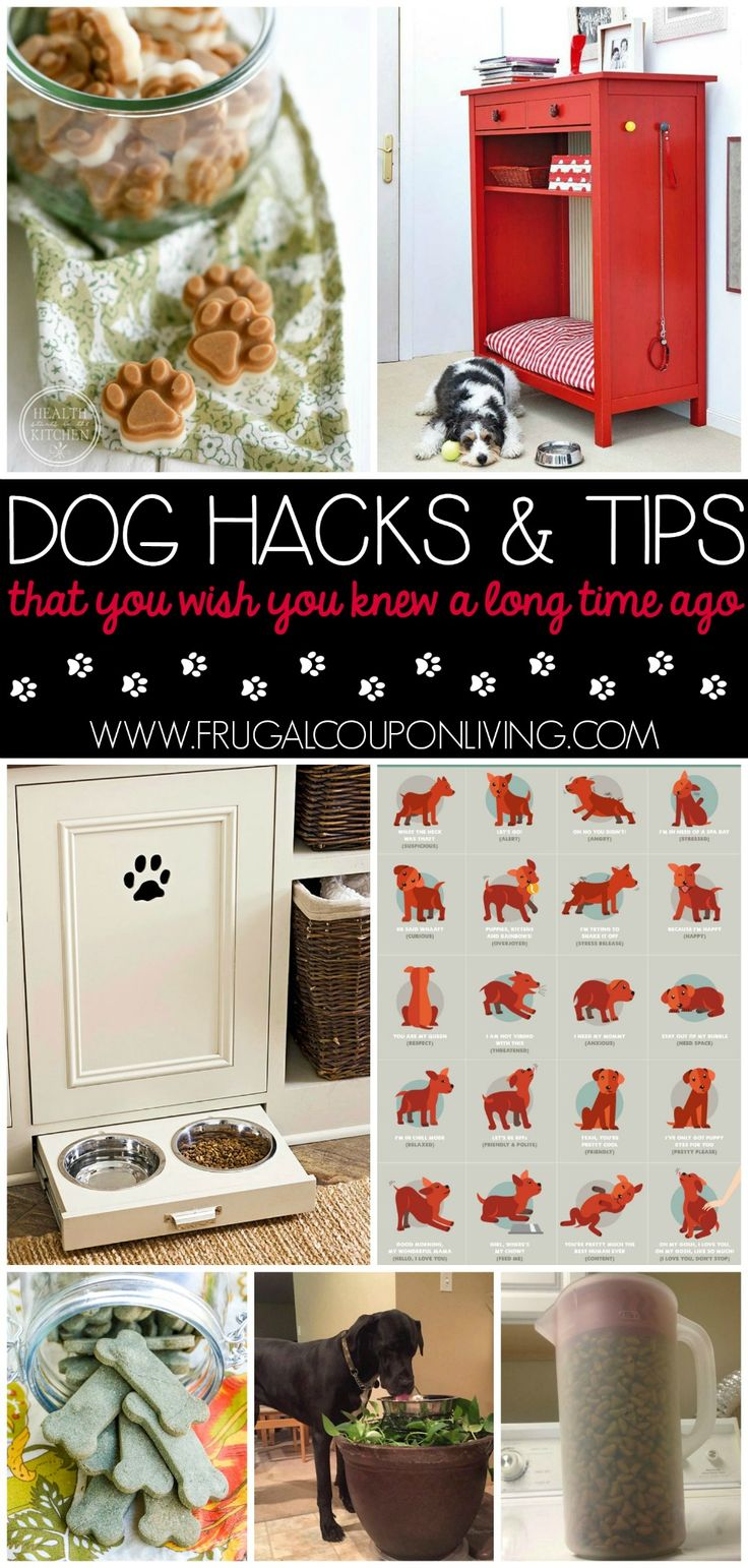 Tips & Hacks For Your Dog ...that you wish you knew a long time ago Pin to Pinterest Whether you are an old dog that might need some new tricks or a ne