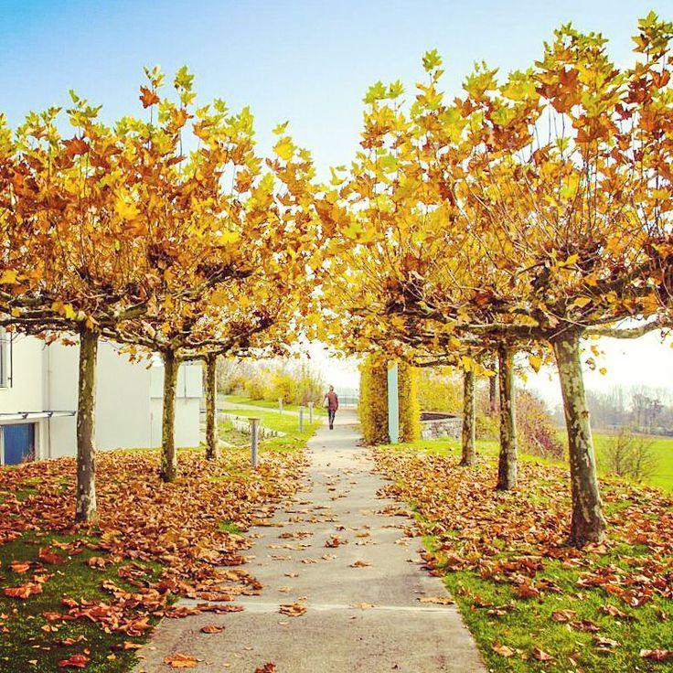 Auch wenn es draußen aktuell gerade etwas trüber ist als hier auf dem Bild von unserer Klinik in Allensbach: Hab Sonne im Herzen und alles wird gut! ☀���� . . . #klinikenschmieder #allensbach #bodensee #walkingonsunshine #nieaufgeben #herbst #beautiful #happy #instagood #neurologischeszentrum #nevergiveup #hope #nature #lakeofconstance #autumn #instamood #stimmung #neurology #colours #bäume #trees #rehaklinik #sunshine #itsabeautifullife #recovery #erholung #walking…