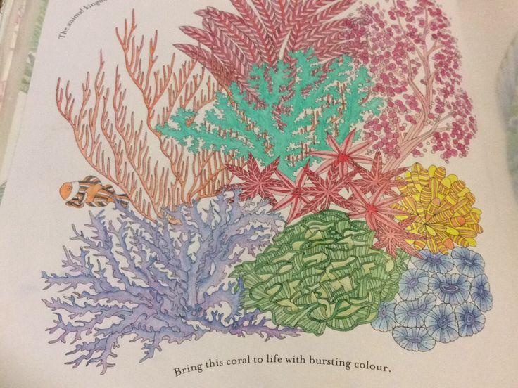 16 Best Colouring Millie Marottas Animal Kingdom Images On