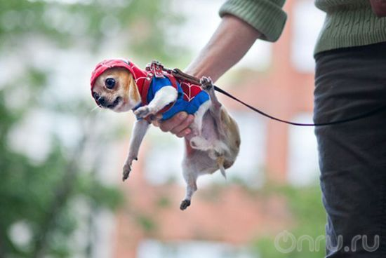 Собака паук - ONRU.RU