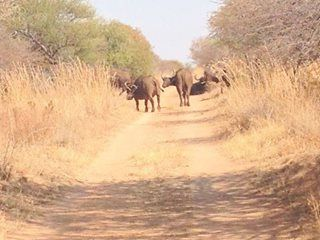 Some more of the great sightings seen Dinokeng Game Reserve.