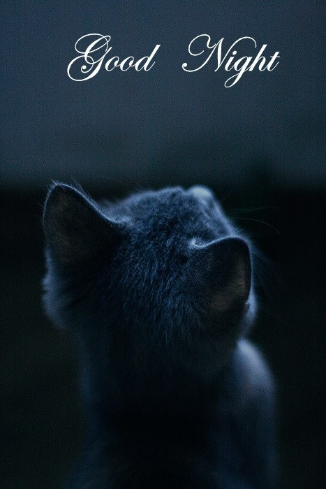 Night Cat Productions: 10 Best Images About Good Night On Pinterest